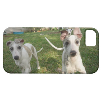 iPhone case with Whippet puppies