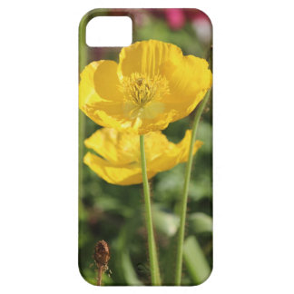 iPhone - Yellow poppies in bloom Case For The iPhone 5