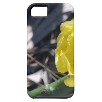 iridescent bee on nopales flower tough iPhone 5 case