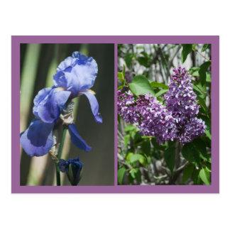 Iris and Lilac Summer Postcard