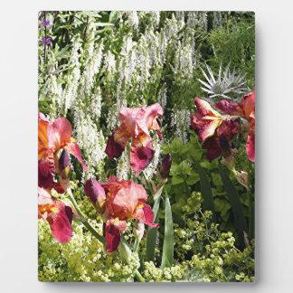 Iris flowers in garden photo plaques