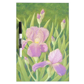 Irises at Wisley Gardens in Surrey in Pastel Dry Erase Board
