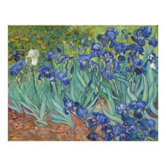 Irises by Vincent Van Gogh Photo