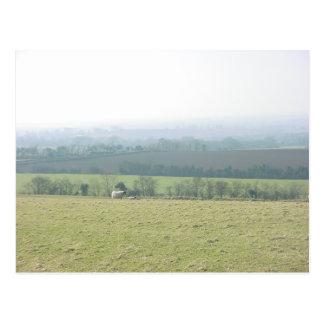 Irish Meadow Postcard