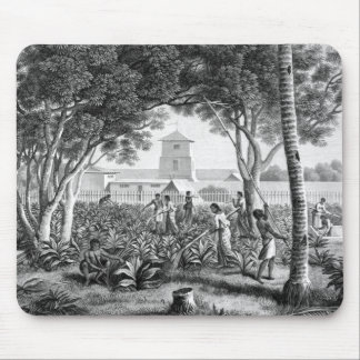 Island of Guam: Natives at Work in the Garden of t Mouse Pad