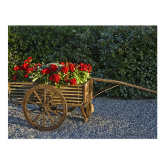 Italy, Tuscany. Red geraniums spill out of an Postcard