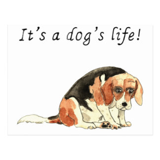 It's a dog's life Funny Cute Beagle Dog Art Slogan Postcard