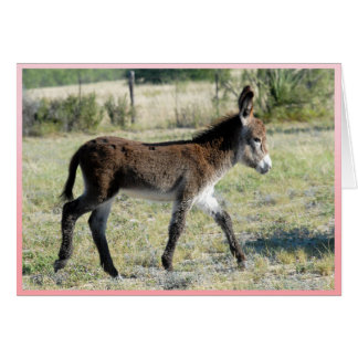 It's Girl!  Baby burro greeting card
