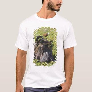 Jacana standing on hippo's (Hippopotamus T-Shirt