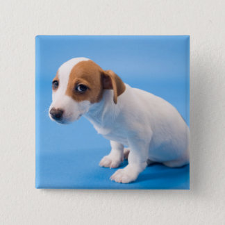 Jack Russell Puppy 15 Cm Square Badge