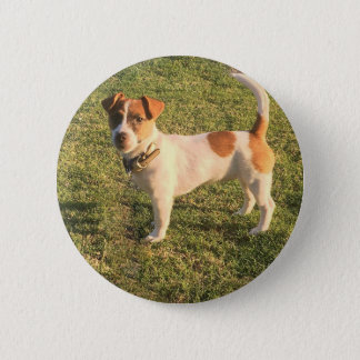 Jack Russell Puppy 6 Cm Round Badge