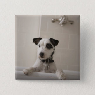 Jack russell terrier. 15 cm square badge