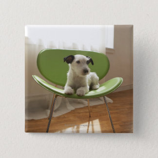 Jack russell terrier. 2 15 cm square badge