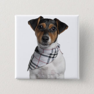 Jack Russell Terrier puppy (4 months old) 15 Cm Square Badge