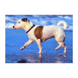 Jack Russell Terrier Running On The Beach Canvas Print