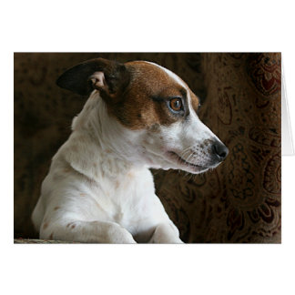 Jack Russell thinking Card