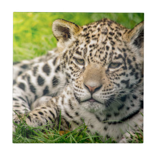 Jaguar cub tile