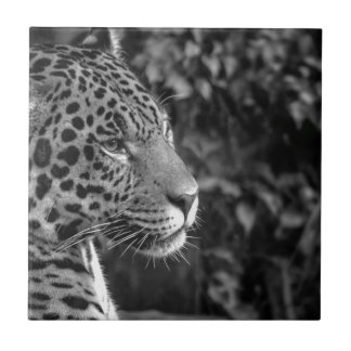 Jaguar in black and white small square tile