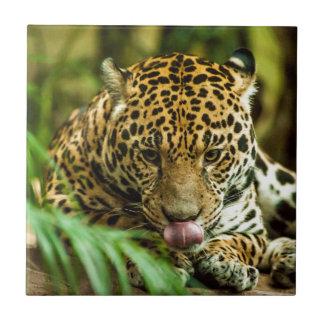Jaguar Tile