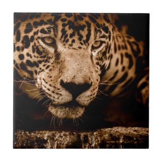 jaguar water stalking eyes tile