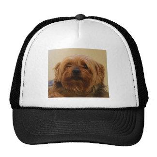 Jake The Yorkie Terrier Cap