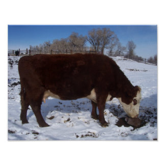 January Cow at the Salt Lick Print