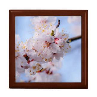 Japanese Apricot Blossom Gift Box