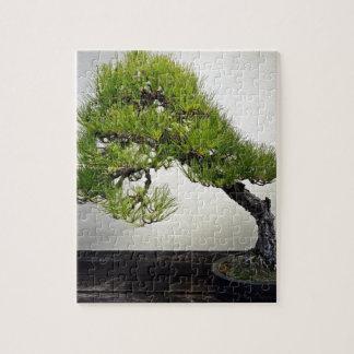 Japanese Black Pine Bonsai Jigsaw Puzzle