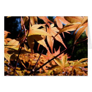 Japanese Maple Autumn Greeting Card