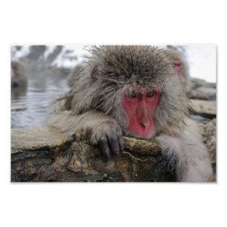 Japanese monkey relaxing in hot spring photo art
