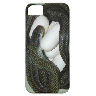 Japanese Rat Snake, beautifull and caring mother! Case For The iPhone 5