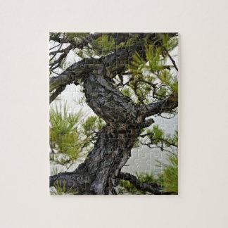 Japanese Red Pine Bonsai Tree Jigsaw Puzzle
