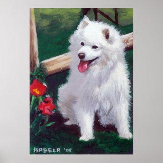 Japanese Spitz Dog Portrait Poster