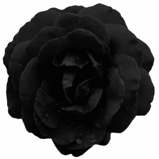Jewelry - Pin - Black Gothic Rose Cut Outs