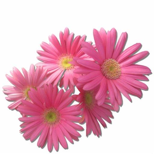 Jewelry - Pin - Dark Pink Gerbera Daisies R/F Photo Cut Out