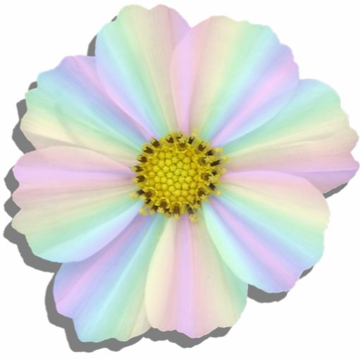 Jewelry - Pin - Groovy Radiant Rainbow Wht Cosmos Photo Cut Outs
