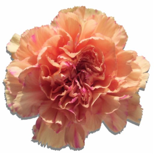 Jewelry - Pin - Peachy Keen Carnation Cut Outs