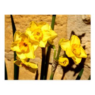 Jonquil Flowers Postcard