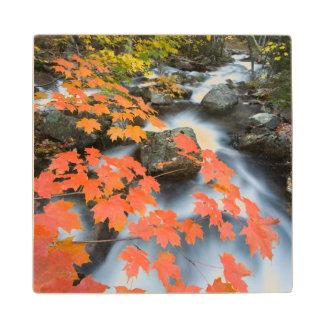 Jordan Stream in fall in Maine's Acadia National Wood Coaster