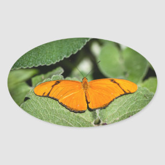 Julia Heliconian Dryas Julia Oval Sticker