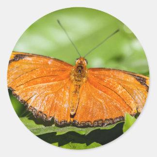 Julia Heliconian Dryas Julia Round Sticker