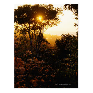 Jungle at sunset, Bali, Indonesia Postcard