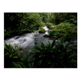 Jungle Stream River Landscape Amazon Postcard