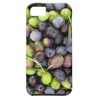 Just picked olives background during harvest time case for the iPhone 5