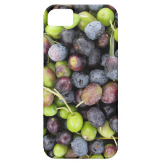 Just picked olives background during harvest time iPhone 5 cases