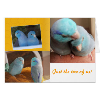 Just the two of us Parrotlet Birds Greeting Card