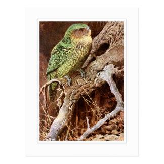 Kakapo Post Card