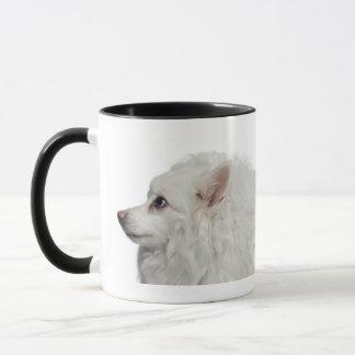 Keeshond (10 years old) close-up mug