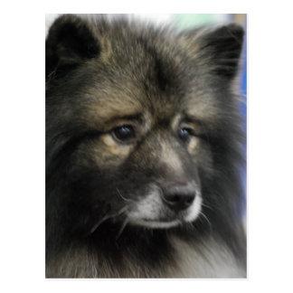 Keeshond Dog Postcard