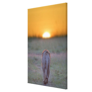 Kenya, Masai Mara 2 Canvas Print
